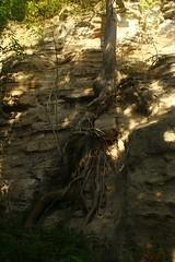 IMG_3521 (ChPflügl) Tags: salzburg österreich austria autumn fall herbst spazieren puch bei hallein urstein sunshine altweibersommer salzach kitsch chpflügl chpfluegl christian europe europa eu world erde sandstein root wurzel sandstone trees baum bäume