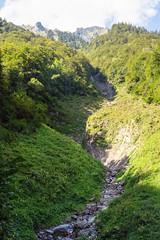 Augstmatthorn (Bephep2010) Tags: 2019 7markiii alpen alpha augstmatthorn berg bern ilce7m3 niederried niederriedbeiinterlaken sel24105g schweiz sommer sony switzerland wald alps forest mountain summer ⍺7iii oberriedambrienzersee kantonbern