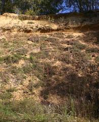 Biotop Sandgrube3139a (naturgucker.de) Tags: ngidn1941606205 cicindelahybrida dünensandlaufkäfer