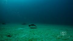 Sea Emperor Wreck and Reef Dive October 04, 2019 BLS-42BLS150 (brianlusmith) Tags: scuba divers scubadivers padi ocean diving coral reef fish rock underwater water sealife wreck saltwater