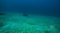 Sea Emperor Wreck and Reef Dive October 04, 2019 BLS-50BLS158 (brianlusmith) Tags: scuba divers scubadivers padi ocean diving coral reef fish rock underwater water sealife wreck saltwater