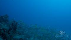 Sea Emperor Wreck and Reef Dive October 04, 2019 BLS-68BLS176 (brianlusmith) Tags: scuba divers scubadivers padi ocean diving coral reef fish rock underwater water sealife wreck saltwater