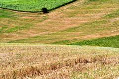 campagna marchigiana (luporosso) Tags: natura nature naturaleza naturalmente nikon nikond500 nikonitalia scorcio scorci country countryside marche italia italy albero tree