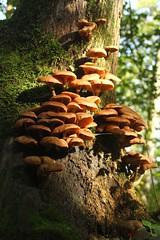 IMG_3427 (ChPflügl) Tags: salzburg österreich austria autumn fall herbst spazieren puch bei hallein urstein sunshine altweibersommer salzach kitsch chpflügl chpfluegl christian europe europa eu world erde pilze schwammerl mushrooms