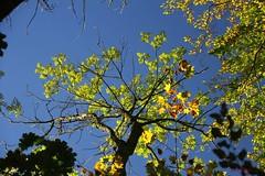 IMG_3516 (ChPflügl) Tags: salzburg österreich austria autumn fall herbst spazieren puch bei hallein urstein sunshine altweibersommer salzach kitsch chpflügl chpfluegl christian europe europa eu world erde