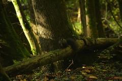 IMG_3507 (ChPflügl) Tags: salzburg österreich austria autumn fall herbst spazieren puch bei hallein urstein sunshine altweibersommer salzach kitsch chpflügl chpfluegl christian europe europa eu world erde eichhörnchen squirl