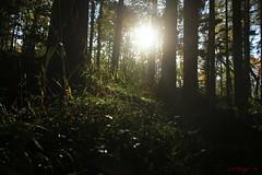 IMG_3469 (ChPflügl) Tags: salzburg österreich austria autumn fall herbst spazieren puch bei hallein urstein sunshine altweibersommer salzach kitsch chpflügl chpfluegl christian europe europa eu world erde sun