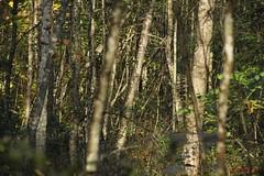 IMG_3433 (ChPflügl) Tags: salzburg österreich austria autumn fall herbst spazieren puch bei hallein urstein sunshine altweibersommer salzach kitsch chpflügl chpfluegl christian europe europa eu world erde trees baum bäume