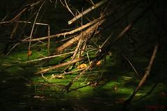 IMG_3409 (ChPflügl) Tags: salzburg österreich austria autumn fall herbst spazieren puch bei hallein urstein sunshine altweibersommer salzach kitsch chpflügl chpfluegl christian europe europa eu world erde