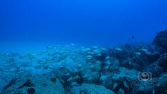 Sea Emperor Wreck and Reef Dive October 04, 2019 BLS-104BLS212 (brianlusmith) Tags: scuba divers scubadivers padi ocean diving coral reef fish rock underwater water sealife wreck saltwater