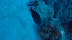 Sea Emperor Wreck and Reef Dive October 04, 2019 BLS-118BLS226 (brianlusmith) Tags: scuba divers scubadivers padi ocean diving coral reef fish rock underwater water sealife wreck saltwater