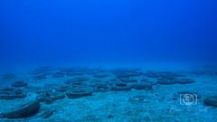Sea Emperor Wreck and Reef Dive October 04, 2019 BLS-155BLS263 (brianlusmith) Tags: scuba divers scubadivers padi ocean diving coral reef fish rock underwater water sealife wreck saltwater