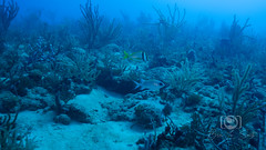 Sea Emperor Wreck and Reef Dive October 04, 2019 BLS-164BLS272 (brianlusmith) Tags: scuba divers scubadivers padi ocean diving coral reef fish rock underwater water sealife wreck saltwater