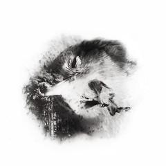 I had a dream (Non - Sequitar) Tags: bird dreams death bw white art mono absoluteblackandwhite blackandwhite