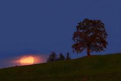 Moonrise (Claude@Munich) Tags: germany moon tree silhouette bayern bavaria evening oberbayern upperbavaria singletree münsing claudemunich badtölzwolfratshausen abend mond baum vollmond abendstimmung abends einzelbaum mondaufgang fullmoon moonrise apogee huntersmoon apogäum weinmond jägermond mondferne