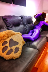 DSC06102 (Kory / Leo Nardo) Tags: fur furry fursuit fursuiting fursona partial partialing poodling spandex lycra shiny metalic purple cd crossdress leohex bodysuit tights paws dobie kory pupleo 2019