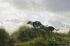 something mystical! (RCB4J) Tags: ayrshire art ayrshirecoast babygrace digitalphotography dobermanterrier dog dogwalkingphotography dune dunes endurance firthofclyde gailes irvinebeach jakob on1 on1pics on1photoraw2019 photography rcb4j ronniebarron siameselurcher sony sony18250mmf3563dtaf sonyslta77v sonyalpha trailhound trailie sunshine sunlight bokeh fairytale mystical paintingwithlight