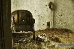 Weinviertel Niederösterreichn_DSC0015Art (reinhard_srb) Tags: weinviertel niederösterreich lost place indoor sessel stuhl heu eierkarton tapete artwork kasten