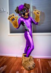 DSC06122 (Kory / Leo Nardo) Tags: fur furry fursuit fursuiting fursona partial partialing poodling spandex lycra shiny metalic purple cd crossdress leohex bodysuit tights paws dobie kory pupleo 2019