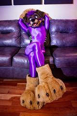 DSC06098 (Kory / Leo Nardo) Tags: fur furry fursuit fursuiting fursona partial partialing poodling spandex lycra shiny metalic purple cd crossdress leohex bodysuit tights paws dobie kory pupleo 2019