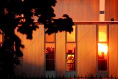 Embrasement graphique ! (Tonton Gilles) Tags: graphisme orange rouge orangé lignes façade ombres feuilles arbre clôture coucher de soleil reflets vitres heure dorée