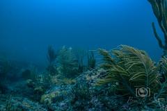 Copenhagen Wreck and Reef Dive September 27, 2019 BLS-98BLS94 (brianlusmith) Tags: underwater photography coral fish ocean dive scuba snorkel wreck reef divers scubadivers padi diving rock water sealife saltwater