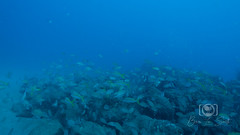 Sea Emperor Wreck and Reef Dive October 04, 2019 BLS-91BLS199 (brianlusmith) Tags: scuba divers scubadivers padi ocean diving coral reef fish rock underwater water sealife wreck saltwater
