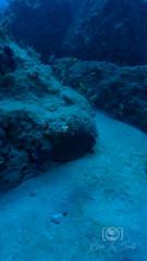 Sea Emperor Wreck and Reef Dive October 04, 2019 BLS-123BLS231 (brianlusmith) Tags: scuba divers scubadivers padi ocean diving coral reef fish rock underwater water sealife wreck saltwater