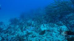 Sea Emperor Wreck and Reef Dive October 04, 2019 BLS-175BLS283 (brianlusmith) Tags: scuba divers scubadivers padi ocean diving coral reef fish rock underwater water sealife wreck saltwater