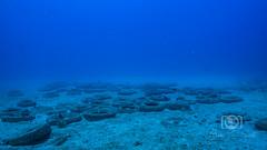 Sea Emperor Wreck and Reef Dive October 04, 2019 BLS-157BLS265 (brianlusmith) Tags: scuba divers scubadivers padi ocean diving coral reef fish rock underwater water sealife wreck saltwater