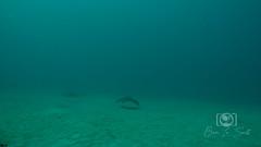 Sea Emperor Wreck and Reef Dive October 04, 2019 BLS-46BLS154 (brianlusmith) Tags: scuba divers scubadivers padi ocean diving coral reef fish rock underwater water sealife wreck saltwater