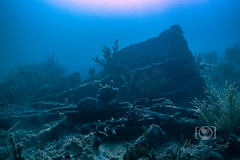 Copenhagen Wreck and Reef Dive September 27, 2019 BLS-16BLS12 (brianlusmith) Tags: scuba divers scubadivers padi ocean diving coral reef fish rock underwater water sealife wreck saltwater