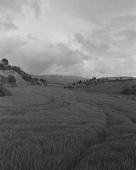 fields of spain (stevebanfield) Tags: blackandwhite monochrome spain camino iso400 scan caminodesantiago ilfordphoto instagram bw film nikon ilford nikonfm2 delta400 pandalab
