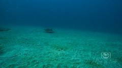 Sea Emperor Wreck and Reef Dive October 04, 2019 BLS-49BLS157 (brianlusmith) Tags: scuba divers scubadivers padi ocean diving coral reef fish rock underwater water sealife wreck saltwater