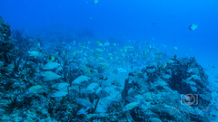 Sea Emperor Wreck and Reef Dive October 04, 2019 BLS-77BLS185 (brianlusmith) Tags: scuba divers scubadivers padi ocean diving coral reef fish rock underwater water sealife wreck saltwater