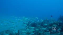 Sea Emperor Wreck and Reef Dive October 04, 2019 BLS-112BLS220 (brianlusmith) Tags: scuba divers scubadivers padi ocean diving coral reef fish rock underwater water sealife wreck saltwater