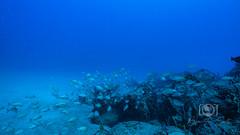Sea Emperor Wreck and Reef Dive October 04, 2019 BLS-113BLS221 (brianlusmith) Tags: scuba divers scubadivers padi ocean diving coral reef fish rock underwater water sealife wreck saltwater