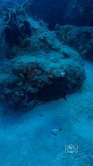Sea Emperor Wreck and Reef Dive October 04, 2019 BLS-122BLS230 (brianlusmith) Tags: scuba divers scubadivers padi ocean diving coral reef fish rock underwater water sealife wreck saltwater