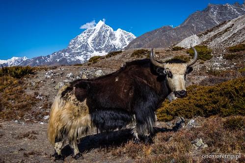 190425-5181-Himalaje 5