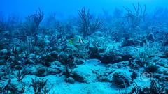 Sea Emperor Wreck and Reef Dive October 04, 2019 BLS-162BLS270 (brianlusmith) Tags: scuba divers scubadivers padi ocean diving coral reef fish rock underwater water sealife wreck saltwater