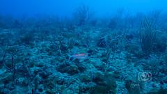 Sea Emperor Wreck and Reef Dive October 04, 2019 BLS-166BLS274 (brianlusmith) Tags: scuba divers scubadivers padi ocean diving coral reef fish rock underwater water sealife wreck saltwater