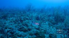 Sea Emperor Wreck and Reef Dive October 04, 2019 BLS-168BLS276 (brianlusmith) Tags: scuba divers scubadivers padi ocean diving coral reef fish rock underwater water sealife wreck saltwater