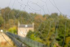 FB_IMG_1482411547695 (wjohnd) Tags: raindrops spiderweb