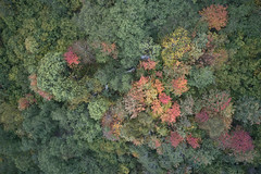Autumn (Skaalnes) Tags: dji mavic drone aerial norway møreogromsdal sunset woods trees green autumn fall colours colors aure todalen