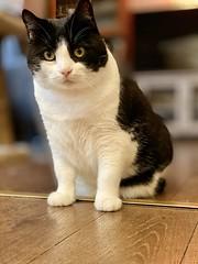 LillyFee 🐾 (unbunt.me) Tags: iphone katze cat