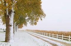 fall color near Lime Springs IA 653A6564 (naturalist@winneshiekwild.com) Tags: snowfall midoctober lime springs howard county iowa larry reis
