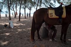 * (Sakulchai Sikitikul) Tags: street snap streetphotography summicron songkhla sony a7s 35mm leica thailand samilabeach horse volleyball seascape sea beach