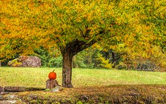 October Delight (Wes Iversen) Tags: hss nikkor18300mm sliderssunday vermont weston autumncolor nature painterly pumpkins rocks stumps trees atsh thisissooctober