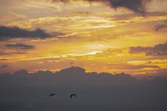 Atardecer en Valencia 95 (dorieo21) Tags: cloud clouds nube nubes nuage nuvola nuages nuvole amanecer himmel cielo ciel aurora aurore alba sonnenaufgang wolke wolken sunrise