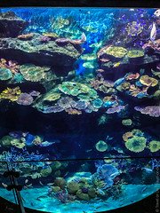 SEA-LIFE-Bangkok-Ocean-World-9298